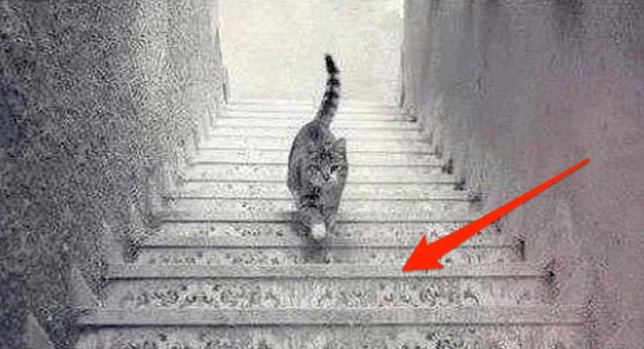 Is the cat going upstairs or downstairs? 9gag.com
