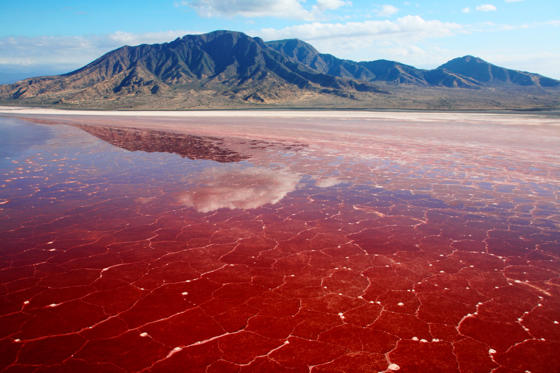 Spirulina algae bloom on salt crusted lake bed #2 (aerial shot), Lake Natron, Tanzania, Africa