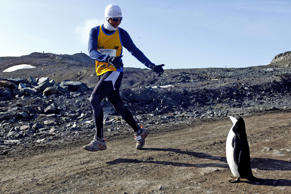 A runner looks at a penguin as he takes part in the Antarctic Marathon, held for the first time in the frozen continent, on March 1, 2013. Fifty-two competitors from different countries took part in the race.