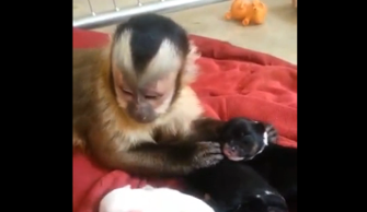 Monkey meets adorable puppies for the first time