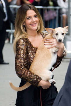 """Drew Barrymore leaves a taping of """"The Late Show with David Letterman"""" with her dog"""