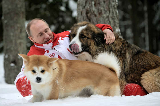 Russian President Vladimir Putin  poses for the cameras as he plays with his dogs