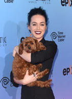 Singer Katy Perry and her dog Butters attend the screening of EPIX's 'Katy Perry: The Prismatic World Tour' at The Theatre at Ace Hotel Downtown LA