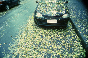 Fallen Leaves on Parked Car