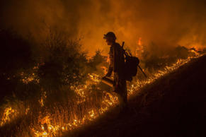 A firefighter sets a backfire while battling the Saddle Fire in the Shasta-Trinity National Forest near Hyampom, California, on June 13.