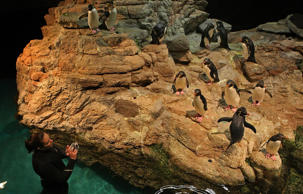 Penguins at the New England Aquarium.