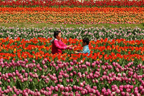 Children play at the Tanto Tulip Festival on April 18, 2015, in Toyooka, Hyogo, Japan.