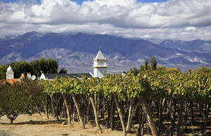 Vineyards in Cafayate, Argentina (Shutterstock)