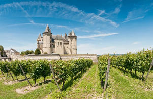 Loire Valley vineyard