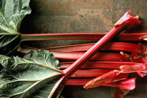 Rhubarb stalks are great in a crumble – but avoid the leaves at all costs. They contain poisonous toxins which could make you very sick, or even kill you.