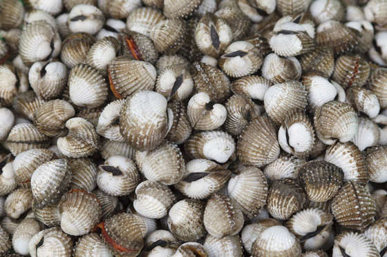 Even if you don't have a shellfish allergy, blood clams are best avoided. The clams can harbour hepatitis A, typhoid and dysentery because they live in lower-oxygen environments. Blood clams from Chinese waters have been linked to hepatitis outbreaks.