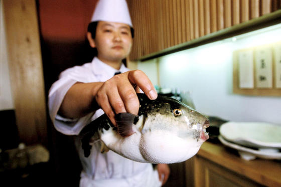 """Slide 6 de 18: Pufferfish, or """"fugu"""", is the world's most dangerous delicacy. Chefs in Japan go through several years of training to learn how to remove the toxic parts of the fish, which are 1,200 times more poisonous than cyanide. Eating just a tiny amount (a pin head) of the wrong bit can be lethal."""