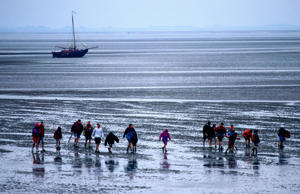 Wadlopers (mudwalkers) on mud flats at low tide, Ameland, Friesland, Netherlands.