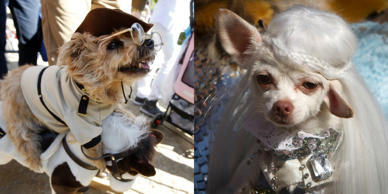 Pups gear up in their best costume for the 24th Annual Tompkins Square Halloween Dog Parade in New York. Check out pups in some interesting Halloween costume.
