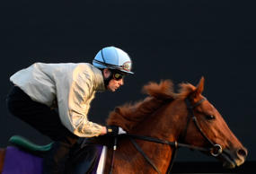 Mustajeeb trains in preparation for the 2014 Breeder's Cup Mile at Santa Anita Park on Thursday in Arcadia, California.