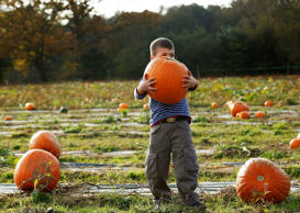 Five-year-old Carter struggles to lift a pumpkin at Tulleys Farm pumpkin patch during their Halloween festival, near Crawley in southern England, on October 28, 2014.
