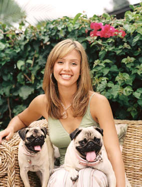 Jessica Alba strikes a picture perfect pose with her pugs Sid and Nandy.