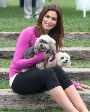 Supermodels Cindy Crawford has waved her fashion-sense wand over two of her favorite pals: Widget and Sugar. In an interview with FashionEtc.com, Crawford said one of her gal-pups owns a wedding gown, and that both the Maltese-Yorkie mixes sport holiday wear that include at least one set of reindeer antlers.