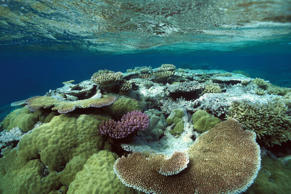 The largest coral reef in the world, which covers more than 344,400 square kilometer, has long been an attraction Down Under. Yet increasing environmental challenges have been steadily eroding the structure for years now. From rising ocean temperatures to an influx of pollution, experts estimate that about 60 per cent of the reef may be lost by 2030.