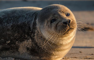 "<span style=""font-size:13px;"">An 11-month-old female sea lion has been shot and killed on the Otago Peninsula - angering the species' backers.</span>"