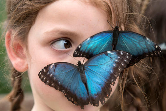 Butterflies sit on the face of Isla, aged 6, in the Natural History Museum's 'Sensational Butterflies' outdoor butterfly house on March 31, in London, England.