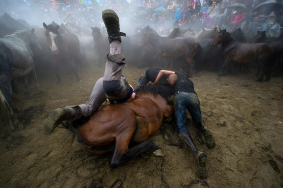 Aloitadores (fighters) tame wild horses during the rapa das bestas (taming of the beasts) on July 5, in Sabucedo, Spain. During the more than 400-year-old festival, that lasts four-days, wild horses are rounded up and wrestled to the ground by hand to have their manes and tails sheared.