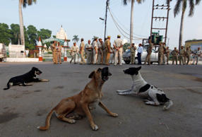 File: Stray dogs rest on a road as Indian security personnel are deployed outside a Hindu temple in Ayodhya, about, 550 kilometers (350 miles) east of New Delhi, India, Sunday, Aug. 25, 2013.