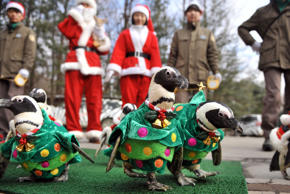 Penguins dressed in costumes are paraded at an amusement park for a promotional event ahead of Christmas in Yongin, south of Seoul, on December 18, 2013. Everland, South Korea's largest amusement park, organized the event to launch its Christmas festival season.
