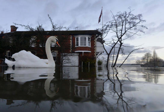 Swans swim near riverside properties partially submerged in floodwaters at Henley-on-Thames in southern England on January 13. Britain's insurers are preparing to pay out hundreds of millions of pounds in claims following a run of winter storms that have flooded homes and disrupted travel, though the absence of major damage should limit the impact on their 2013 results. More than 1,700 homes and businesses have been affected by the floods in England since late December, which also killed seven people, according to news reports.