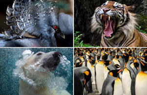 From finding a one in a 100 million albino lobsters to the panda triplets, we have had some stunning animal photography in 2014. Click through to see some wonderful animal images.