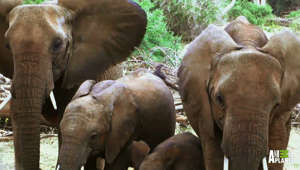 Elephant families are just like us - They play, love and mourn