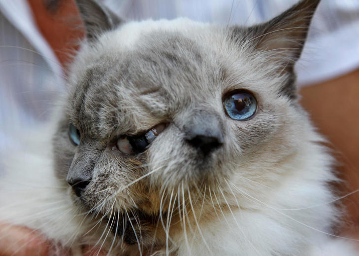 The world's oldest two-faced cat has died at the age of 15 in the US.