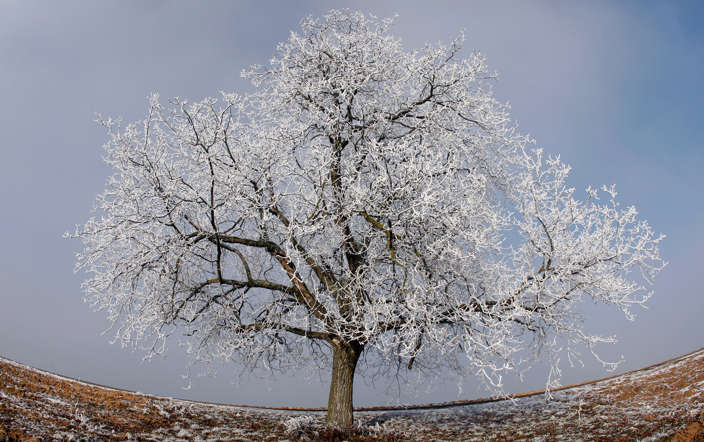 A tree covered in frost is pictured in the Alsacian countryside near Strasbourg as sub-freezing winter temperatures hit the country January 12, 2009.  REUTERS/Vincent Kessler (FRANCE) - RTR23BDZ