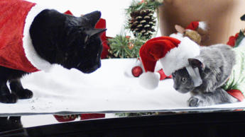 Wishing You A Slow Motion Cat Christmas!