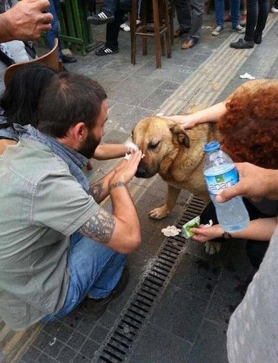 Pedestrians stop to help a dog tear-gassed during a demonstration.
