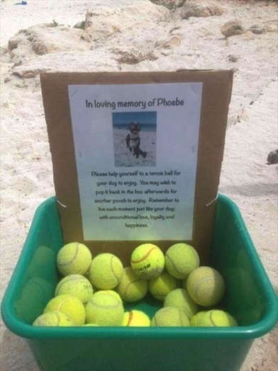 A man made this offering in memory of his dog Phoebe.