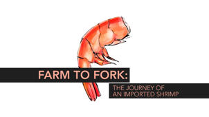 Farm to Fork: The Journey of an Imported Shrimp