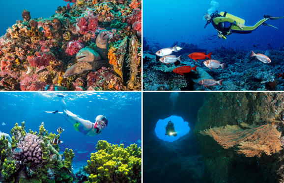 Slide 1 of 21: Swimming with the fish: Places to go scuba diving this summer