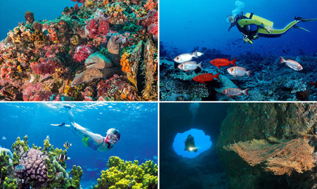 Bild 1 av 21: Swimming with the fish: Places to go scuba diving this summer
