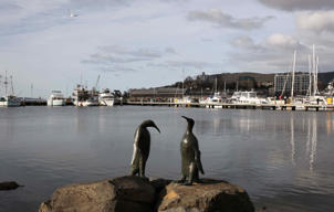 Sculptures of penguins are seen overlooking the Derwent River. You can take a 30-minute trip around Hobart, the majestic Derwent river and surroundings at $125.