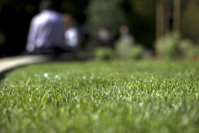 The grass in a drought-tolerant garden is pictured during a media preview at Descanso Gardens in La Canada Flintridge, California April 8, 2015.
