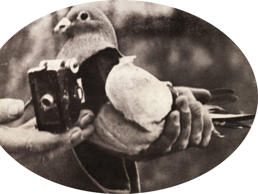 A pigeon caught during World War1 carrying a spy camera