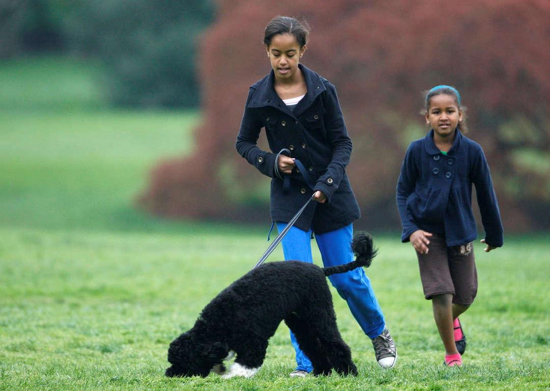 Sasha Obama cachorro BO